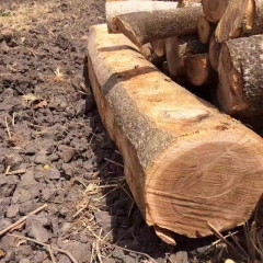 American Brazilian imports of teak logs for 4000 square FOB transactions welcome to order wholesale