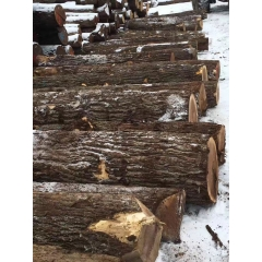 The latest supply of US imports of black walnut logs 0SC / 1SC American furniture production materials wholesale
