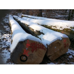 The latest good material on the line imports of German beech logs AB level wholesale