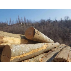 The latest supply of German imports of beech logs ABC grade diameter of 30 ~ 39cm wholesale