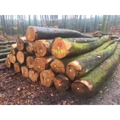 Hand has been tested in Europe imported beech logs diameter 30-39cm wholesale