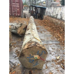 Supply of imported German beech logs AB level wear beech wood paste home quality assurance wholesale