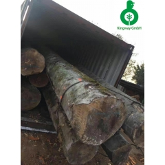 Fresh arrival German beech logs AB-level forest in person inspection wholesale