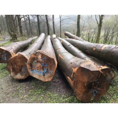 The forest field personally inspect the freshly baked beech logs only 9 cabinets wholesale