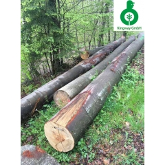 Fresh forest has just been tested for German beech logs AB wholesale