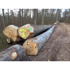 Kingwaywood imports of German beech logs AB level wholesale