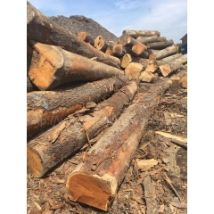 Kingwaywood Supply US imports cherry logs wholesale