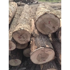 Kingwaywood hand inspection North American imports of white Ash logs  can be sawing cutting wholesale
