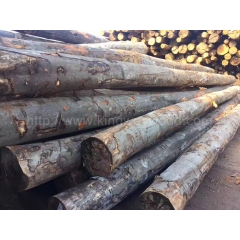 Kingwaywood latest pre-sale German beech logs AB grade can be sawed solid wood board wholesale