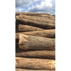 Kingwaywood supply a large number of US cherry logs can be cut high-grade furniture imports wholesale