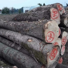 Kingwaywood European hardwood ash log raw material ABC wood sawing wood import wood supply 70 container stable supply wholesale