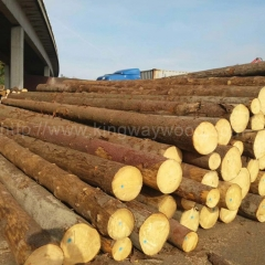 kingwaywood industry imports European spruce log solid wood Europe wood for monthly supply of 20000 cubic timber raw materials wholesale