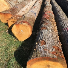 kingwaywood import French white oak logs solid European oak ABC grade stable monthly furniture floor cutting wholesale