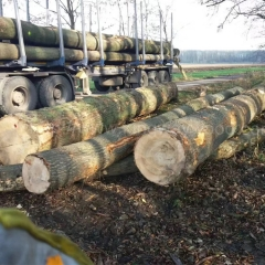 kingwaywood import European ash log ABC grade log European wood logs ash sawtimber wholesale wholesale
