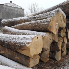 Kingwaywood Europe hardwood imports solid wood ash wood logs sawing boards ashwood ash ash wholesale