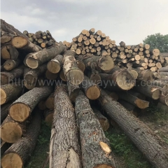 kingwaywood imports wood white oak European wood solid wood log wood plank timber AB class raw materials wholesale wholesale