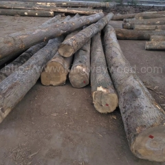 kingwaywood imports European wood ash wood solid wood log sawing board ABC class monthly for 50 cabinets of wood wholesale raw materials wholesale