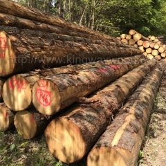 Kingwaywood imports European spruce logs solid wood fir wood furniture raw materials wood wholesale
