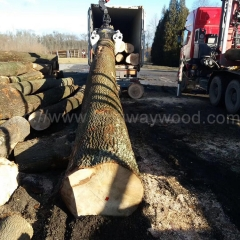 Ash wood imported from kingwaywood industry ABC grade ash log Europe solid wood wholesale