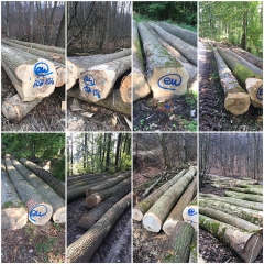 kingwaywood industry European ash log ash wood ash ash solid wood ABC grade wholesale