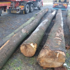 kingwaywood import European wood ash ash solid wood ash log sawing ABC grade wholesale