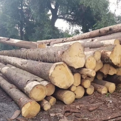 Spruce wood imported from kingwaywood industry solid wood log European spruce Czech spruce ABC grade wholesale