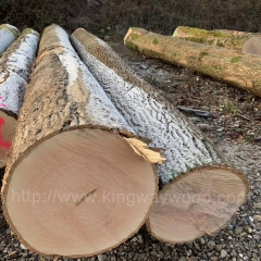 kingwaywood industry imports log ash wood ash log solid wood European ash wood raw materials wholesale