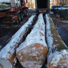 kingwaywood industry European beech wood log imported timber log Fagus Sylvatica AB class beech wood wholesale